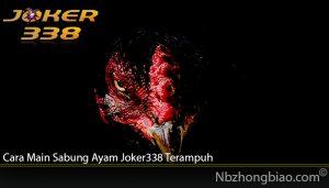 Cara Main Sabung Ayam Joker338 Terampuh